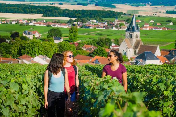 Balade dans les vignes de Champagne